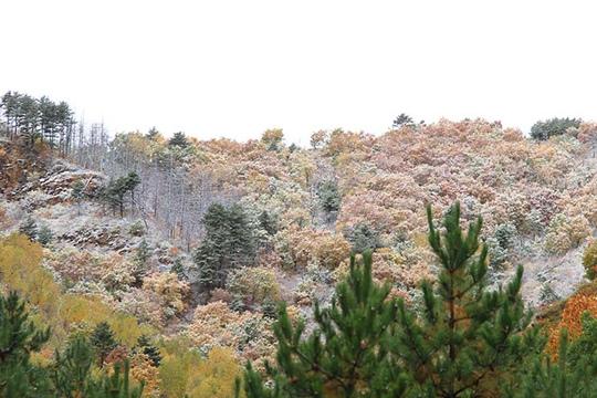 河北围场雪后银装素裹秋色浓