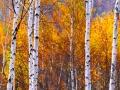 黑龙江伊春原始森林如同调色板
