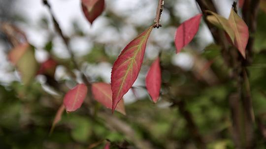 寒露美图:秋叶黄时鸟换羽