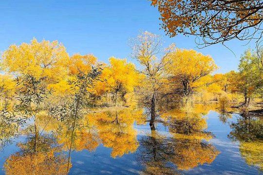 从内蒙古胡杨林到大兴安岭 看秋色撩人