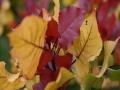 周末去赏叶 北坞公园多彩叶景等你来