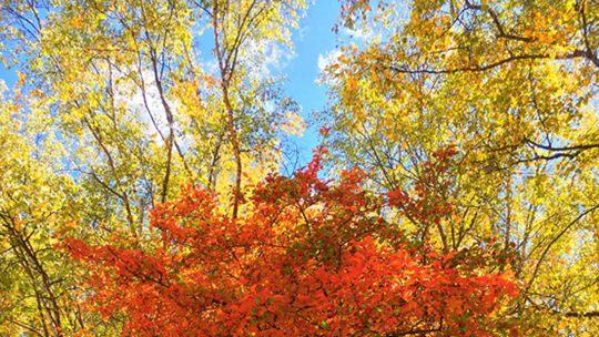 秋色撩人 十月的香格里拉美爆了