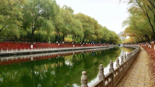 京西秋日一景:红岸黄柳南长河