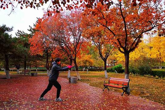 河北廊坊深秋雨后叶满地 冬意初显