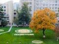 """围观中国气象局大院里的""""网红树""""和大地艺术"""