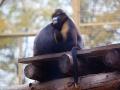 """萌萌哒!北京动物园里动物取暖姿势组别样""""表情包"""""""