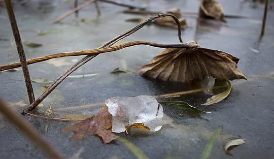 小雪节气 朔风劲吹冰始封