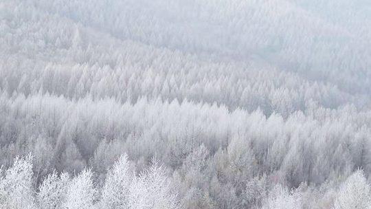 """河北塞罕坝林场现大面积雾凇 仿佛""""白色海洋 """""""