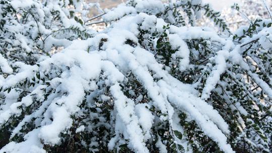 陕西西安白鹿原降今冬首场雪 一片银装素裹