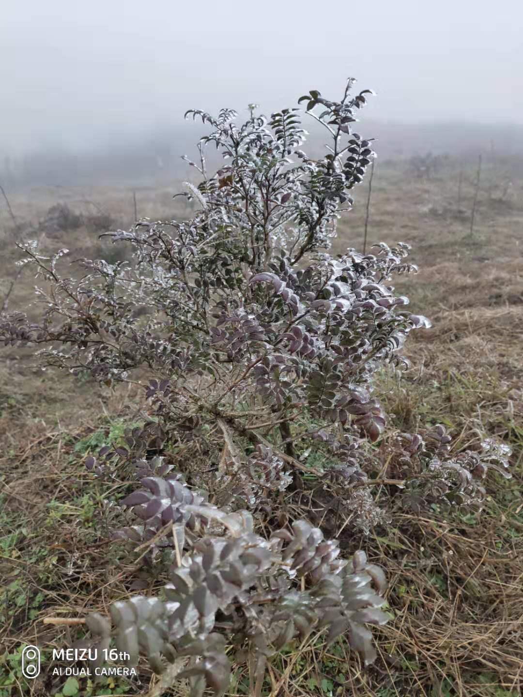 凝冻!贵州德江县多个乡镇出现今年首个凝冻天气