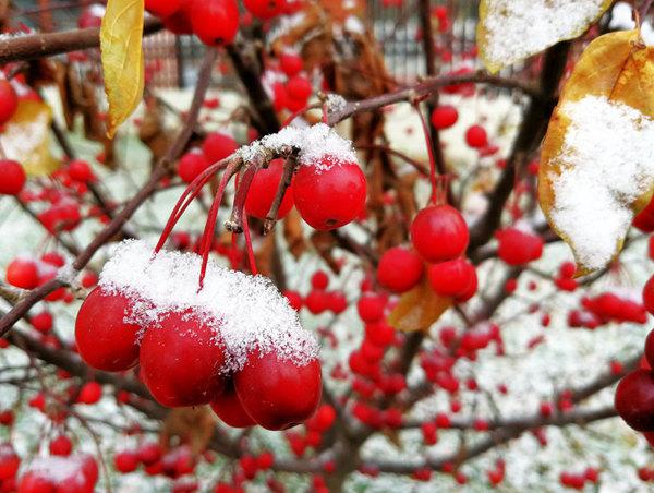 河北保定迎初雪 雪景美如画