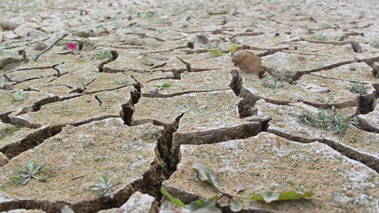 广东开平58天无降水 水渠干涸土地龟裂