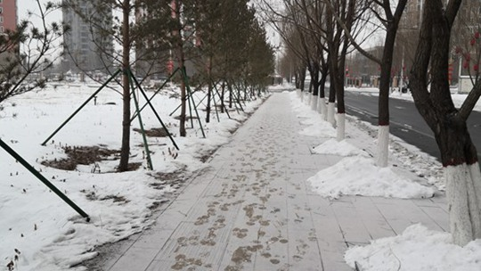 内蒙古鄂尔多斯市区残雪未化  又见飘雪