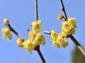颐和园:腊梅开放正当时 阳光下的田园乐趣