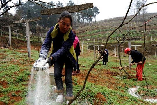 贵州贵阳:抢农时补损失 抗疫劳作两不误
