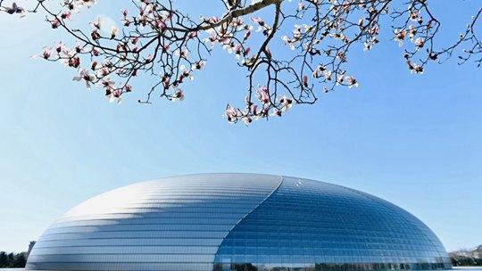 北京气温回升 玉兰花开春意渐浓