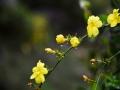 春雨:��物�不可能�o� 草木萌●�踊ǚ曳�