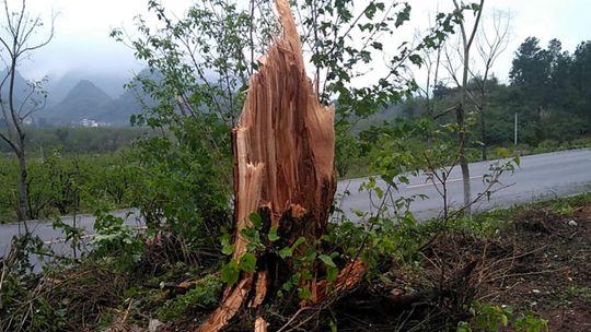 广西恭城遭遇冰雹大风 房屋受损大树折断