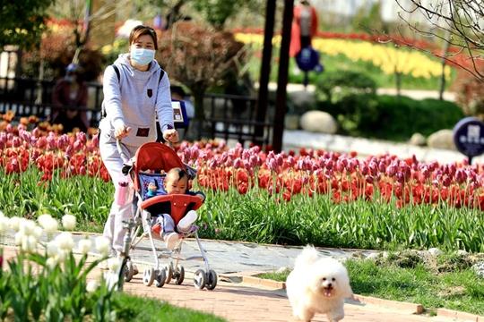 湖北黄冈花开如海 市民户外感受春天
