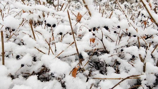 寒潮影响下的北方:雨雪纷飞局地降20℃
