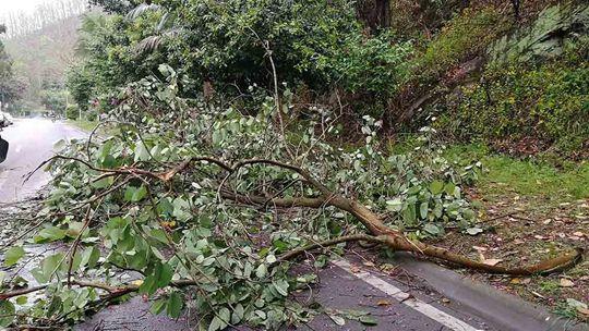 四川宜宾:风雨大作 树木倒伏