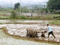 广西象州:人勤春来早 农友插秧忙