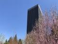 北京碧空如洗暖意足 花开正艳易过敏