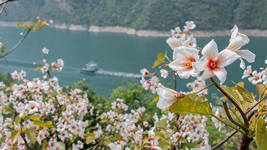 重庆:三峡又迎春浓时 两岸风景秀丽