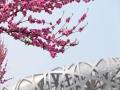 北京奥林匹克公园:春已暖 花正艳