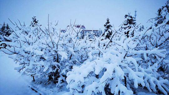 河北承德围场迎降雪 有效缓解防火压力