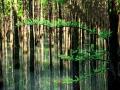 黃山頭風景區水杉綠意盎然 最美四月天