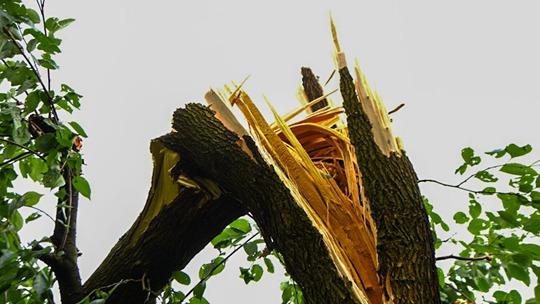 贵州贵阳遭遇10级大风袭击 大树被拦腰折断