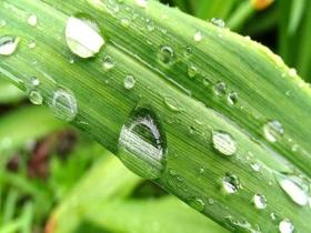 雨后哈尔滨太阳岛自然清新 生趣盎然