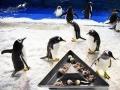 哈尔滨:小企鹅的端午美食