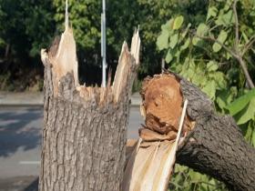 辽宁辽阳遭遇强对流 瞬时最大风力达10级路旁大树被吹断