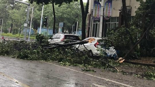 台风米克拉来袭 福建龙海多处树木被刮断