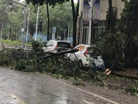 """台风""""米克拉""""来势汹汹  福建龙海多处树木被刮断"""