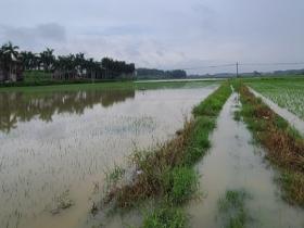 臺風過后 廣東湛江部分鄉鎮農田受浸道路通行受阻