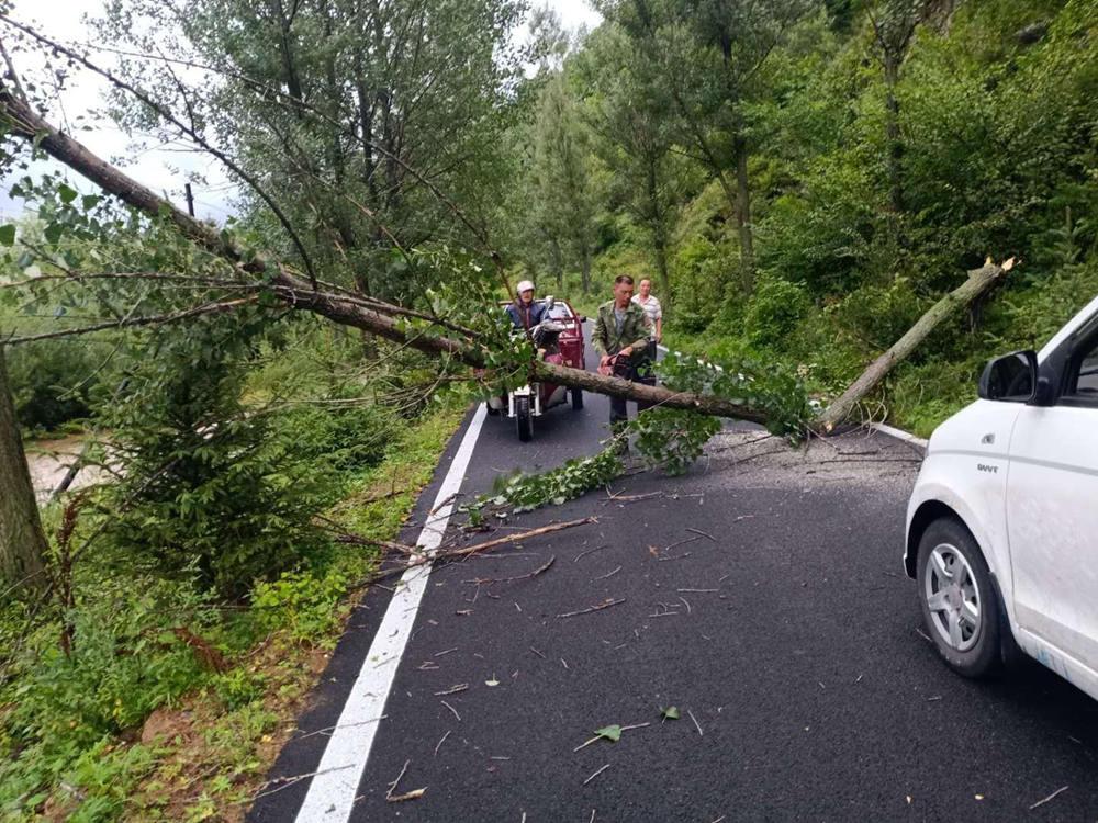 """""""巴威""""來襲!吉林部分地區河流漲水 樹木被強風折斷"""