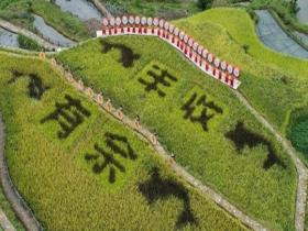 割稻谷捉田鱼 中国农民丰收节盛况空前