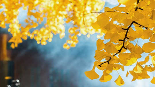 一行字一幅秋 这样的秋景你见过吗?