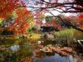 秋赏红叶 看大自然秋日里的艳丽画卷