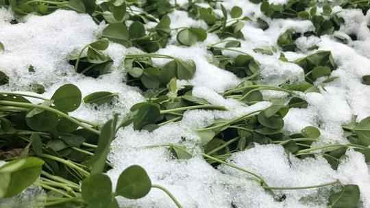 甘肅迭部迎來今年下半年首場雪