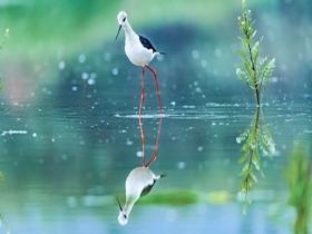 重庆南川迎来迁徙候鸟 姿态曼妙宛如精灵