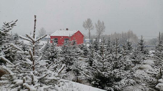 呼伦贝尔迎来入冬以来第一场大范围降雪