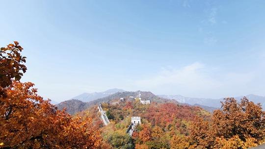 深秋时节北京慕田峪长城色彩斑斓