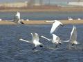 河北罗平湖碧波荡漾 成群候鸟翩翩起舞