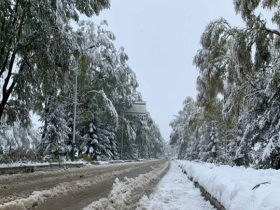 甘肃临夏积雪结冰 多处树枝被压断