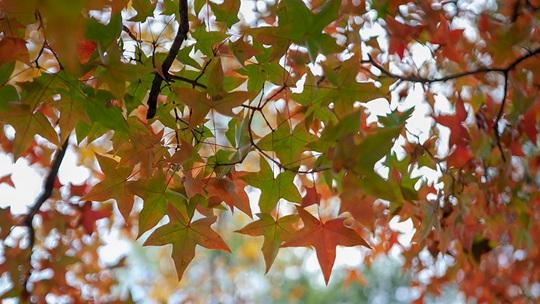 秋正浓!北京紫竹院公园色彩斑斓