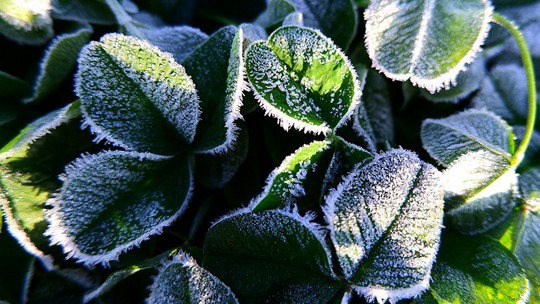 哈尔滨现霜冻 阳光下植被闪银光